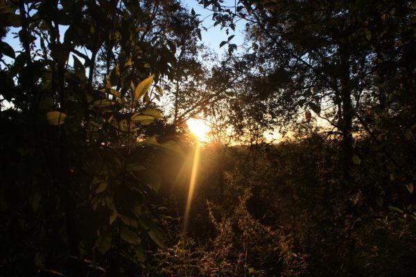 bosque encantado santuario de las luciernagas en nanacamilpa mexico
