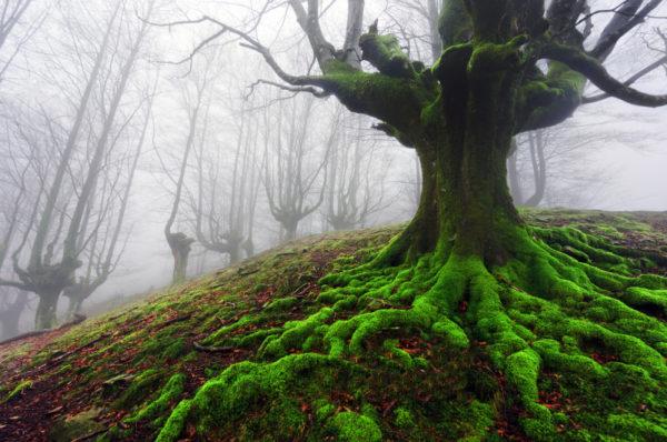 hayedo de otzarreta bosque encantado pais vasco