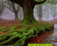 El Hayedo de Otzarreta, un bosque encantado en el Pais Vasco