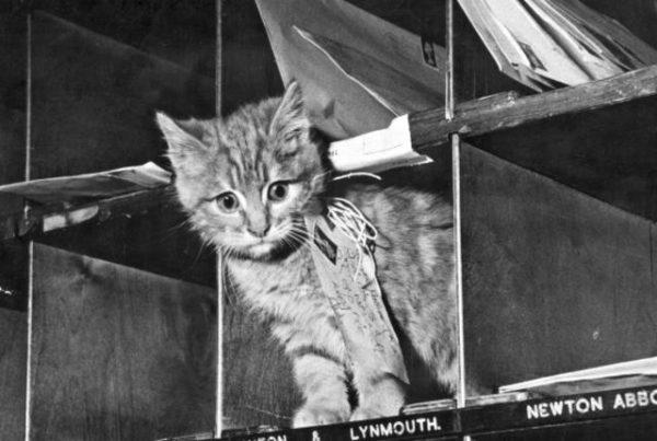 La historia de los 37 gatos que entregaban el correo en Bélgica