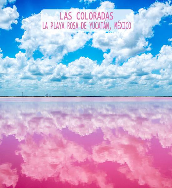 Las Coloradas La Playa Rosa De Yucat 225 N En M 233 Xico Coyotitos