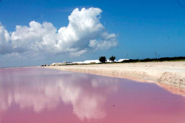 Las Coloradas, la playa rosa de Yucatán en México | Coyotitos