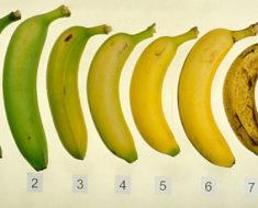 ¿Sabes cuál de estas 7 bananas es más saludable?