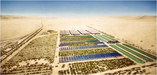 Crean un bosque en medio del desierto de Egipto
