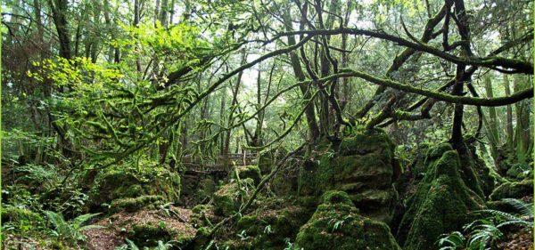 Puzzlewood, el bosque que inspiro la Tierra Media del El Señor de los Anillos