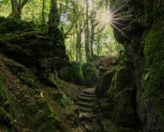 bosque puzzlewood coleford reino unido