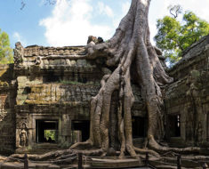 Los gigantescos árboles del templo de Ta Prohm