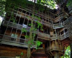 La increíble historia de la casa del árbol más grande del mundo