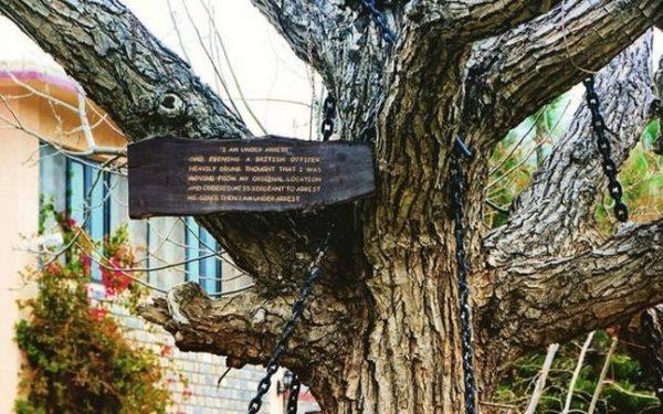 La sorprendente historia del árbol que fue arrestado