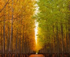 Boardman, una granja de árboles en Oregón con mucho encanto