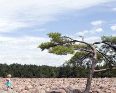 El sorprendente campo de rocas de Hickory Run State Park, Pensilvania