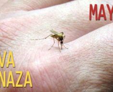 ¡Atención! Mayaro, un nuevo virus
