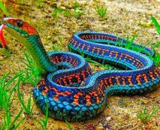 Esta serpiente mexicana no había sido vista en más de 70 años