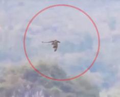 Vídeo de un dragón volando en China se vuelve viral
