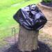 Su marido cortó este árbol. 2 semanas después le quitó la bolsa