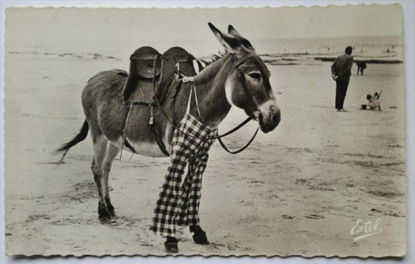 burros con pantalones de la isla de Ré