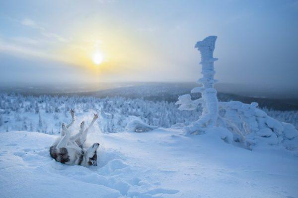 curiosidades laponia finlandia