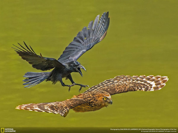 Estos fueron los ganadores del concurso de National Geographic a Fotógrafo de la naturaleza 2016