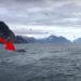 Mientras grababan gaviotas, algo increíble salió del mar