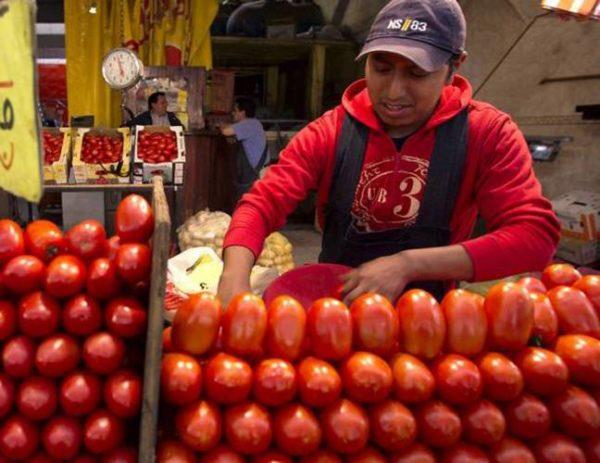 En Oaxaca, el tomate es rebajado a 75 centavos el kilo debido a la falta de exportación
