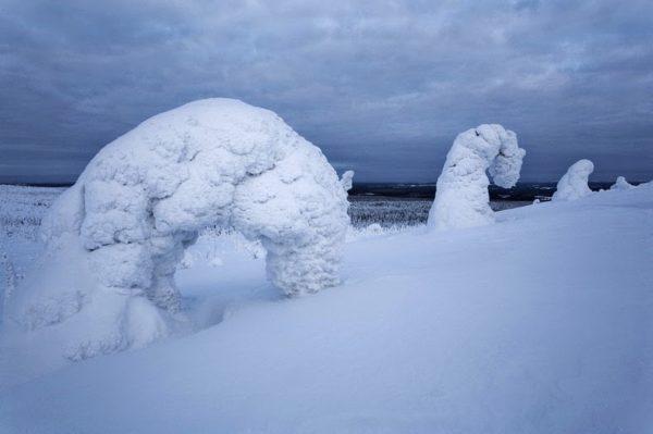 Las mágicas figuras de nieve en Riisitunturi National Park