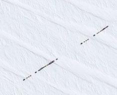 Jamás adivinarás qué es esta línea negra en un fondo blanco