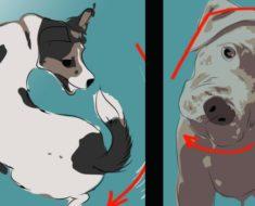 Esta es la razón por la que debes poner atención a las poses de tu perro