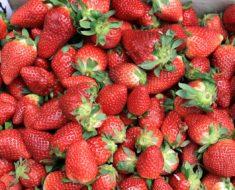 Campesinos de Guanajuato venden sus cajas de fresas a 25 pesos por culpa de los bloqueos de EU