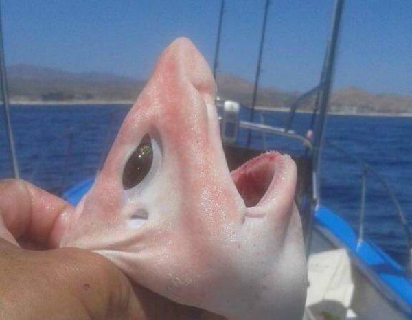 Capturan un extraño tiburón en Cabo San Lucas.