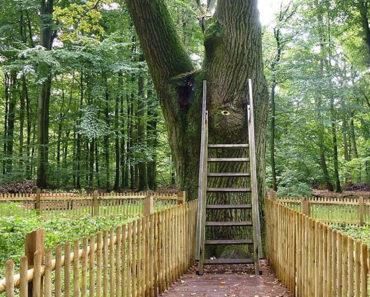 Descubre la romántica razón por la que este árbol es el único del mundo con código postal