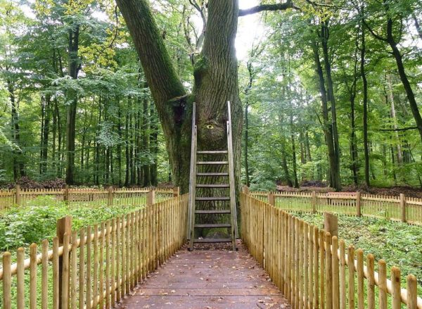 Bridegroom's Oak la romántica razón por la que este árbol es el único del mundo con código postal