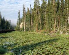 Este lago en Yellowstone tiene algo que ningún otro lago del mundo posee