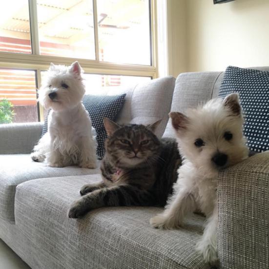 No te puedes perder las reacciones de este cachorro al conocer al gato de la familia