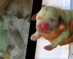 5 perros que nacieron de color verde, ¡y aun así son adorables!