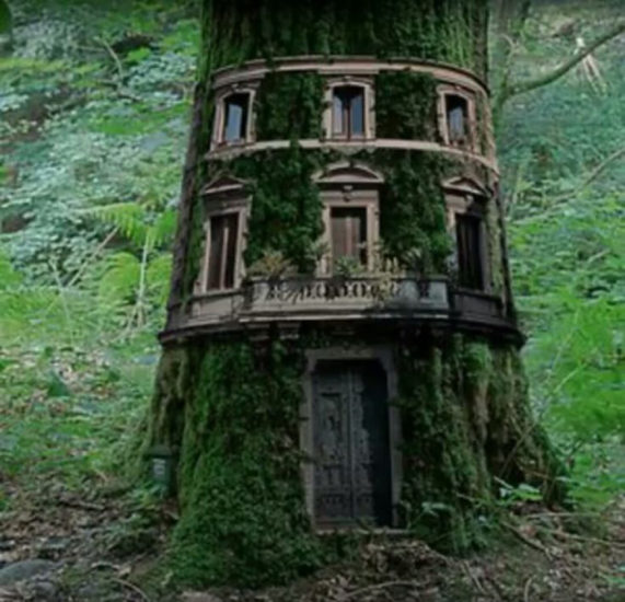 arquitectos cuidaron naturaleza