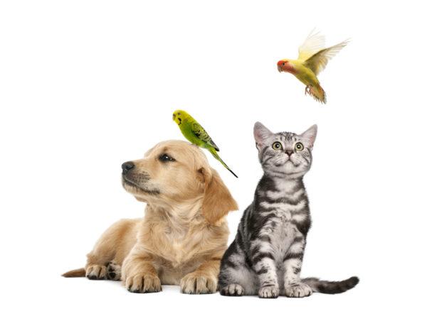 donde acariciar perros gatos aves mascotas