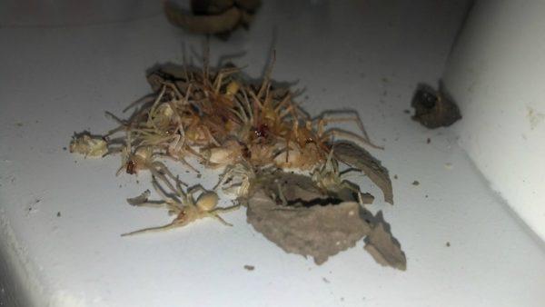 Este chico encontró algo aterrador en su cocina. ¡Es algo que me impacto!