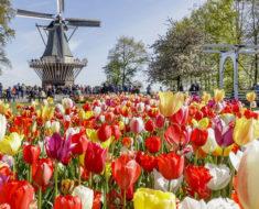 Keukenhof, el más bello jardín de flores del planeta