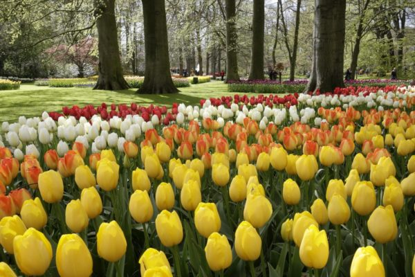 keukenhof jardines de tulipanes amsterdam