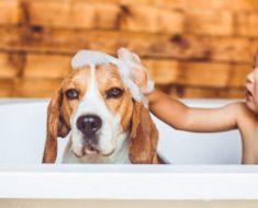 Se ha confirmado que los perros pueden sentir cuando una persona es mala