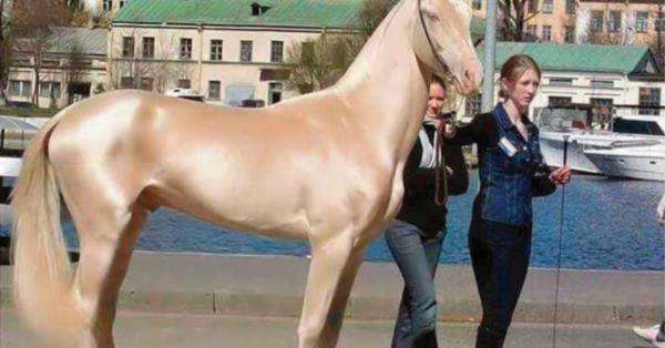 Fue elegido como el caballo más bello del mundo, pero entonces notaron algo en su pelaje