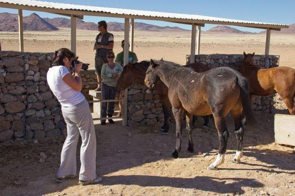 Los hermosos caballos salvajes del desierto de Namib