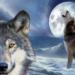 La parábola de los lobos, una lección para toda la vida