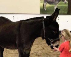 Esta enferma niña abraza la cara de un burro y entonces algo increíble sucede