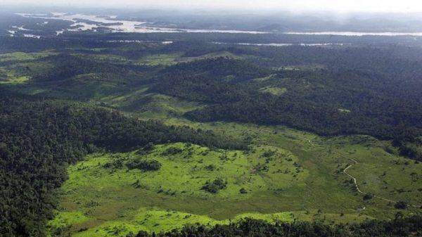La fabulosa historia del hombre que plantó una selva de 30 hectáreas con sus propias manos