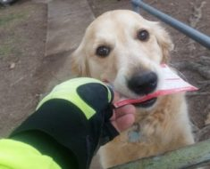 Todos los días este perro espera al cartero. Pero lo que hace cuando no hay correo ha enternecido a todo el mundo