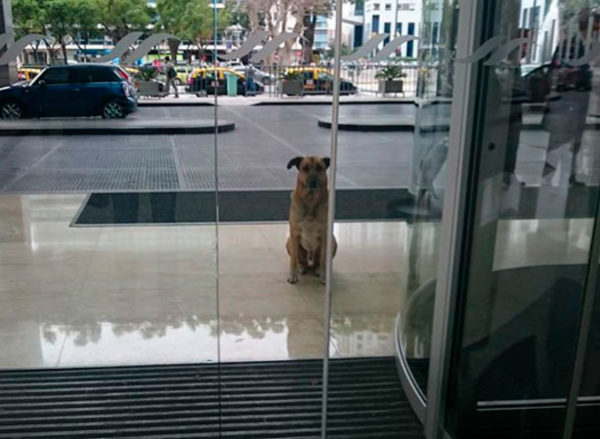 Perro esperaba fuera de un hotel todos los días, hasta que un día ocurrió un milagro y…