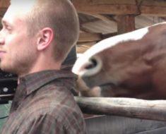 Se suponía que grabaría una entrevista pero este caballo no le dejaba en paz