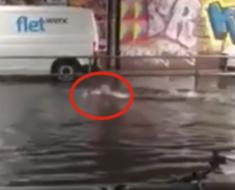 Llovió tanto que la calle se inundó por completo. 2 minutos después, emerge algo del agua que deja a todos atónitos