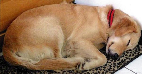 Todos los días un perro desconocido llega a dormir a la casa. Un día descubren una nota en su collar